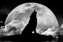 Io voglio la luna