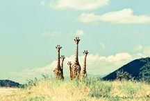 Safari / African Mood Board:  Style - Design - Inspiration - Impulse -Incitement - Distinctive - Indigenous