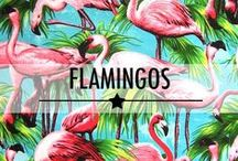 It's All About: Flamingos