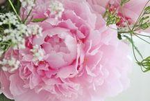 fleurs rose ...rose...rose