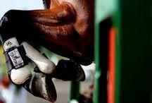 Horse photo shoot ideas / by Alyssa Jernigan