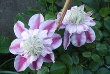 fleurs bleu / mauve /bordeaux