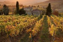 Vineyards / Wine and Dine at the most beautiful Vineyards