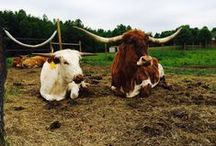 Our Farm Family / We're excited to introduce you to some of the newest members of our farm family.