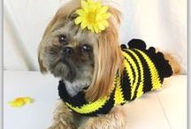 Dress Me Up! / Pet accessories