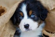 #puppyfever / puppies, puppies and MORE PUPPIES!