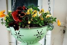 Flowers, Greens, & Garden / by Kelsey Matthews