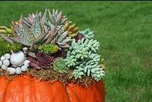 Succulent - Projects