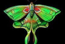 butterflies / A few treats from natures, always beautiful.