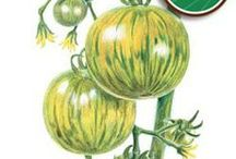 Vegetables / We offer the finest selection of gourmet vegetable seeds. Whether you're looking for tried-and-true varieties, or want to explore new culinary delights, you'll be pleased with our selection of gardener favorites, and atypical vegetable seeds.