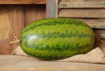 Everything Watermelon / Refreshing goodness.