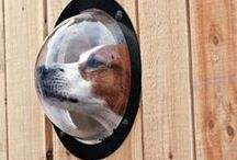 For the Home - Pet-Friendly Ideas / Great products and home ideas for your furry friends.