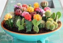 Container Gardening / Think terrariums, mason jars, baskets and buckets.