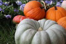Autumn / Golden leaves, pumpkins & apple cider.
