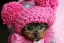 Sooo cute!!
