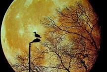 Adoradora da LUA / A lua dos amantes, dos lobos uivantes, das fases feminina e das marés