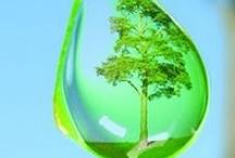 Verdes / Azedos, equilibrados, natureza, pássaros, objetos, roupas, frutas, cabelos, pinturas, etc