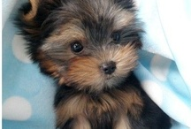 Puppies that r 2 cute / by Helen Reed
