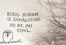 Owl / by Milo