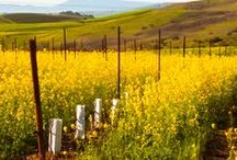 """Colorful California / Photos from around Napa, Sonoma and Marin Counties in northern California--the """"North Bay"""" area--both in Spring and Autumn as well as along the Big Sur Coast and in the Central Valley, Sierra Nevada and others places of beauty in the """"Golden state""""!"""