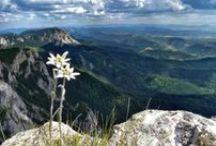 Bucegi Mountains, Romania / by Janusz Szporer