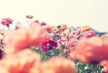 - summer breeze -
