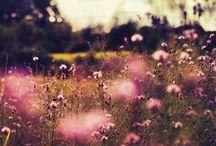 - blooming summer -