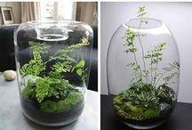 Terrariums & Succulents / by Ufuk Topçu