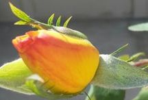 Natureza / Flores, bichos, e tudo mais.