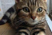 kitty / :x