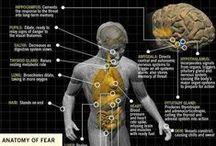 Stuff regarding our bodies