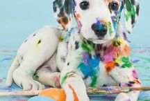 Colouring brave