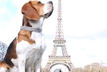 Living Paris