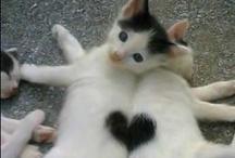 Aww...Too cute!!