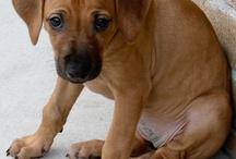 Simba & Tigga / A true friend leaves paw prints on your heart!