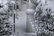Winter / Love the silence of fresh fallen snow !