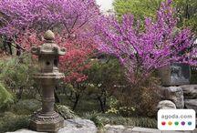Japan / by Mary Lee (Skokos) Leszczuk