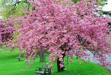 járadal:flores,plantas,jardines