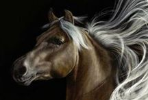 EQUINE / by BSDVisions