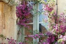 Outside space / Gorgeous greenery and beautiful blooms.