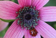 Garden (Flower&Veg)