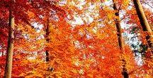 Herbst Farbtyp / Ihr Farbpass soll Ihnen Inspiration und Sicherheit geben. Die Typologie des Herbstes ist warm, erdig, naturverbunden, individuell und von satter Leuchtkraft. Die Pinnwand ist nach dem Herbst - Farbpass inklusive der Angabe der Farbpassnummern strukturiert und kann so als leichte Orientierungshilfe für Ihre künftige Garderobengestaltung verwendet werden. Viel Farbe ins Leben! Herzlichst Ihre Kerstin Tomancok (Dipl. Image Consultant/ www.kerstin-tomancok.at)