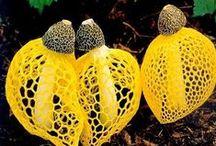 mushroom and fungus