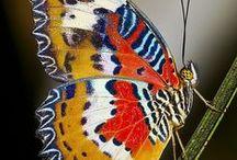 butterflies & moth