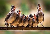 birds and nest