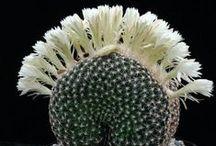 cactus  -  succulents