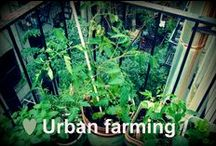 Bliv bybonde - urban farmer / Bor du i byen og drømmer du om at dyrke dine egne grøntsager i haven, om at høre bierne summe på altanen og lave din egen kompost i baggården? Så få inspiration her!