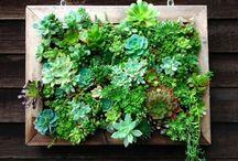 Vertical Garden / Ideas de jardinería vertical
