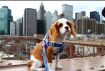 Dog Harnesses / Collection of stlyish and practical harnesses to make walking your dog that much easier #Dogharness