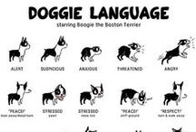 Dog Training and Tips / Lots of useful information for training and understanding your dog #dogtraining #dogbehaviour